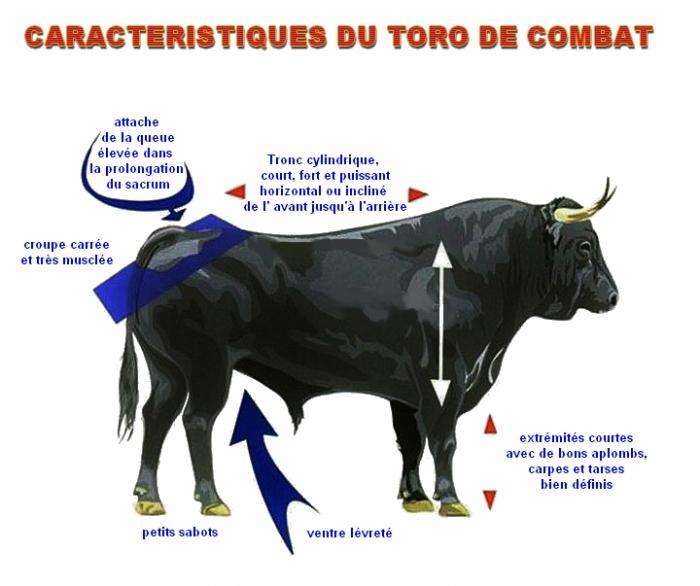 Caracteristiques du toro de combat