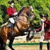 Ecole portugaise d art equestre 2