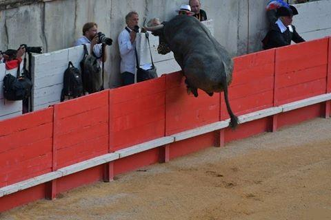 Un toro sauteur